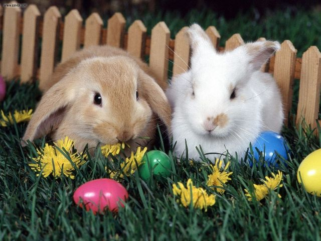 Image result for Easter egg hunt and petting zoo image